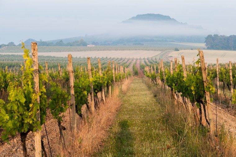 Mlsounova cesta za vínem - Čechy